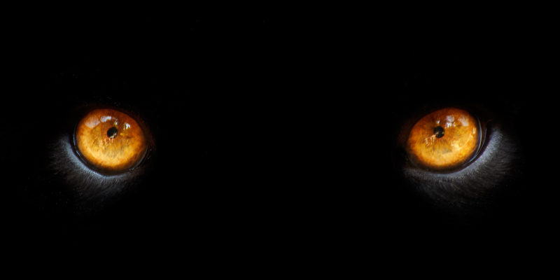 Raubkatzen-Augen Copyright Eric Gevaert @ fotolia.caom