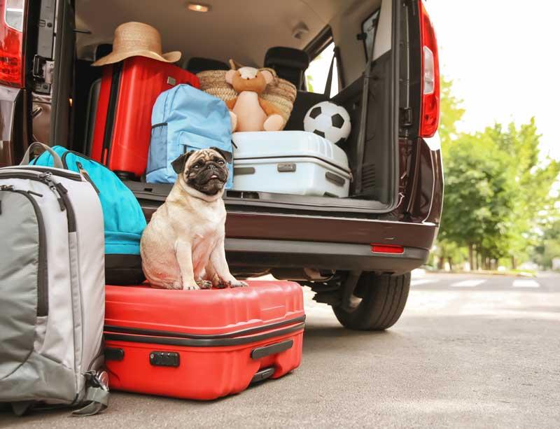 Reisen mit Hund – Einreisebestimmungen Teil 1