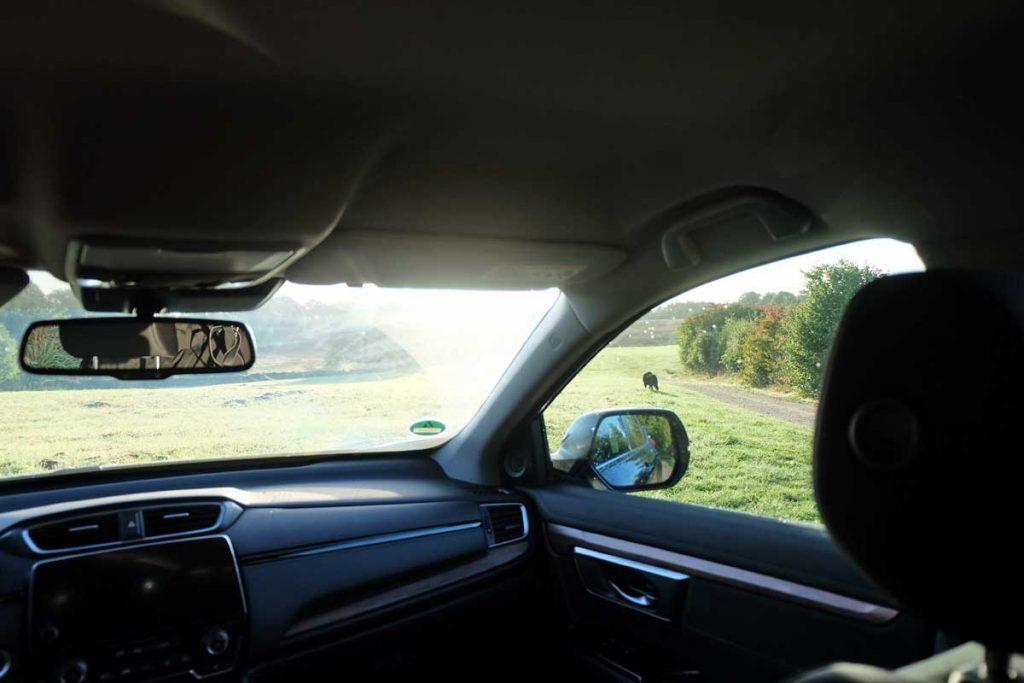 Honda CR-V 2,0 i-MMD Panoramablick